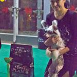 BEST беби 2 место Китайская хохлатая собака ОГНЕННЫЙ ЛОТОС ПУЛЬХЕРИЯ АЛЬВА, вл. Трушникова