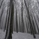 Der schönste Abschnitt der heutigen Wanderung - das letzte Stück durch reinen Buchenwald