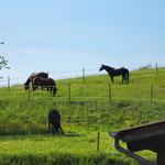 Pferde hinter dem Haus