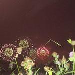 ゴロゴロしながら花火観賞。最高に幸せ!  (ルナさんより。感謝です(^^))