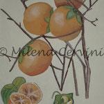 ERBARI  CACHI - affresco a secco su tela con malta e terre naturali colorate - 25x30 cm