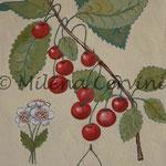ERBARI  CILIEGIE - affresco a secco su tela con malta e terre naturali colorate - 25x30 cm