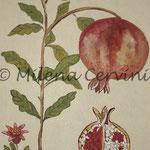 ERBARI MELOGRANO - affresco a secco su tela con malta e terre naturali colorate - 25x30 cm