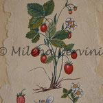 ERBARI  FRAGOLE 2 - affresco a secco su tela con malta e terre naturali colorate - 25x30 cm