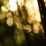 Spnnennetze