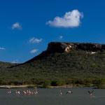 Flamingo's, beautiful nature, Curacáo, Carribean