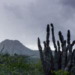 beautiful nature, Curacáo, Carribean