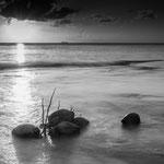 coconut beach, beautiful nature, Curacáo, Carribean