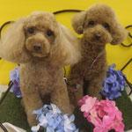 クッキーちゃん&ユメちゃん