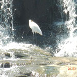 uccelli sul fiume