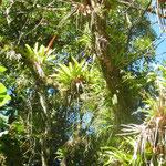 piante meravigliose a Nova Trento