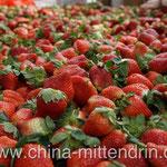 Ja, frische Erdbeeren kann man vor allem im Winter an vielen Straßenecken kaufen. Ich rate, die Finger davon zu lassen. Denn sie sind entweder sauer oder halb vergoren. Man kann in den Hügeln Xiamens ab ungefähr Weinachten selbst Erdbeeren pflücken.