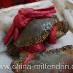 """Der Fischhändler rief: """"Fotografieren Sie die Krabben, die sind heute besonders schön!"""""""