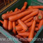 Karotten kann ich nie genug bekommen. (Kein Photoshop! Das sind wirklich die originalen Farben!)