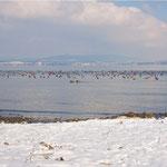 Bodensee im Winter, Dezember 2008