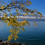 Herbststimmung am Genfersee bei Montreux 24. 10. 2012