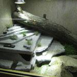 Stachelschwanzwaran Terrarium