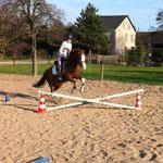 Auch seine jüngste Reiterin mit 9 Jahren trägt Nawajo über die ersten kleinen Hindernisse