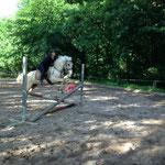 Milo und seine Reitbeteiligung Jenny lernen den ersten kleinen Sprung kennen :-)