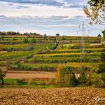 Weingärten Hütteldorf - Herbst 2016