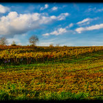 Weingärten bei Hütteldorf