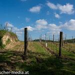 Mit Korkenzieher im Hintergrund  - 17.04.2014 - (c) Egon  Fischer