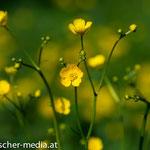 Natur bei Ahrenberg  - 17.04.2014 - (c) Egon  Fischer