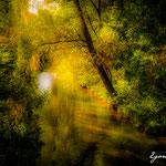 Die Perschling bei Tautendorf - Herbst 2016