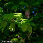 In der Nähe des Schlossteiches  - 17.04.2014 - (c) Egon  Fischer