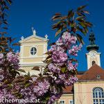 Heiligenkreuz bei Gutenbrunn  - 17.04.2014 - (c) Egon  Fischer