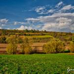 Weingärten bei Hütteldorf - Herbst 2016