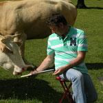 L aquarelle attire les vaches