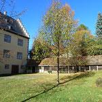 Linden im Innenhof
