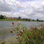 in-folio / Mantes la Jolie / plantation de berge sur le stade nautique