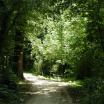 in-folio / Bord de Marne à Châlons en Ch. / promenade  dans le boisement de rive
