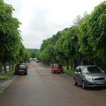 PRECY SUR OISE Rues Plantées / allée H. Youf, perspective sur la vallée de l'Oise, en juin