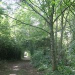 in-folio / Mantes la Jolie / réouverture de sentiers dans les bois le long de la Seine
