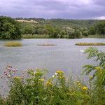 in-folio / Mantes la Jolie / jardins flottants sur le lac des Pêcheurs