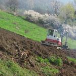 désouchage d'un terrain en vue de plantation