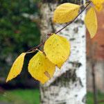 Осенний мотик