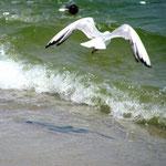 Чайка над волной