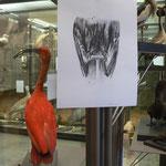 Exposition personnelle / En réserve / Galerie zoologique du Muséum-Aquarium de Nancy / 2012-2013