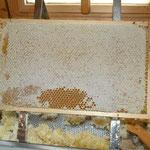 Fast vollständig verdeckelte Honigwabe