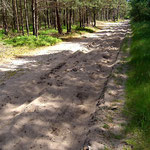 ... und Trockenwald mit sandverwehten Wegen.