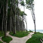 ... daß ihm die vordersten Bäume des darüber stehenden Waldes nicht standhalten können; ...