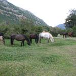 Um uns herum sind ganz viele wilde Pferde, die sich durch uns nicht stören lassen.