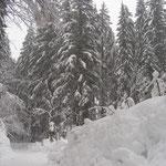 tief winterlich die Wanderwege