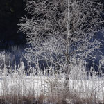 Bildergalerie vom Eislaufen