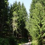 über den Forstweg zum Durchspring