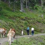 Tier und Mensch wanderten zusammen